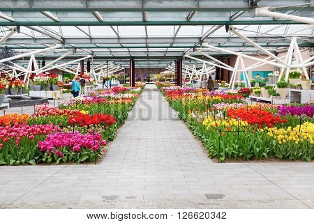 Lisse, Netherlands - April 4, 2016: Colorful tulips flower blossom and people taking photos in pavilion of dutch spring garden Keukenhof, Lisse, Netherlands.