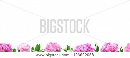 Frame From Pink Peony Flower On White Background With Copy Space For Greeting Message. Spring Flower
