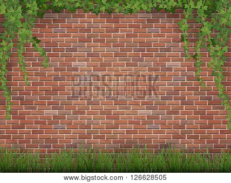 Rural background. Ivy and grass on brick wall background.