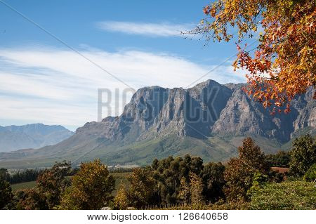 Cape Wine Lands in the Autumn/Fall, Stellenbosch, South Africa