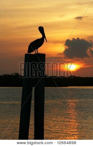Pelican Sunrise on Boca Ceiga Bay Madeira Beach Florida. poster