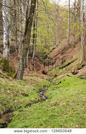 narrow brook flowing through the steep valley in the Beskydy mountains