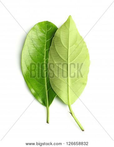 a green leaf isolate on white background