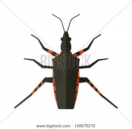 Water scavenger beetle isolated on white background wildlife animal coleoptera vector bug.