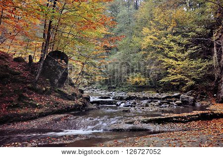 Autumn landscape with trees and a river