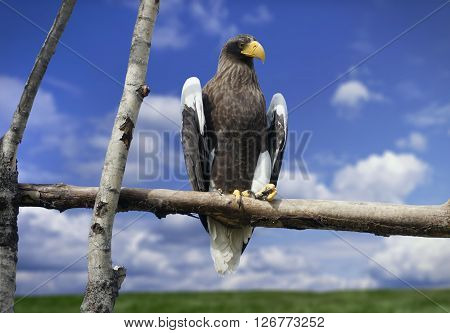 Look at an American bald eagle with a yellow beak sitting on a tree branch