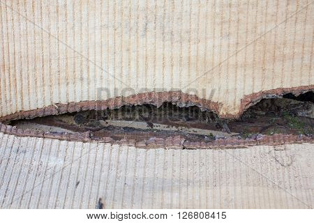 beautiful texture tree trunk section sumer time