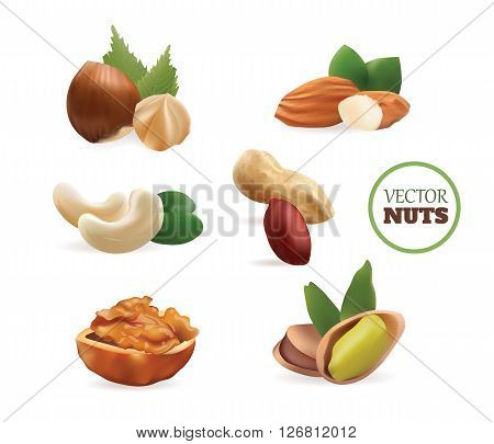 Vector Realistic Collection of Nuts. Isolated on White Background