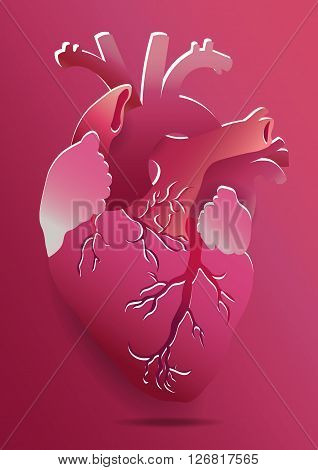 Vector Isolated Realistic Heart Illustration On Pink Background. Eps 10
