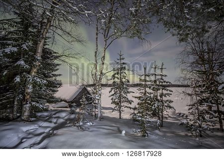 Winter forest under the lights of Aurora borealis. Northern Karelia. Russia.