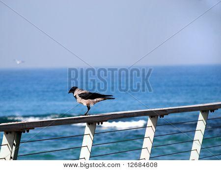 A Raven On A Rail