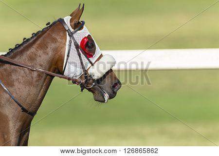 Horse Racing Head Blinkers