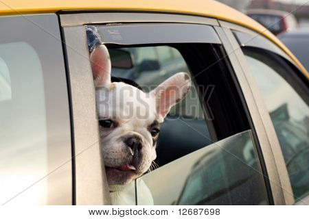 Passenger of a taxi