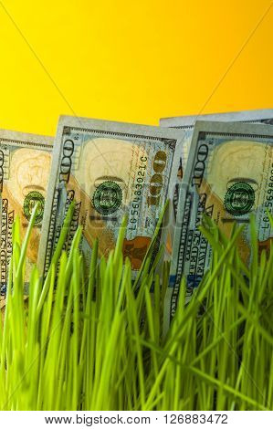 Dollar banknotes in green grass. Money growth. Financial concept.