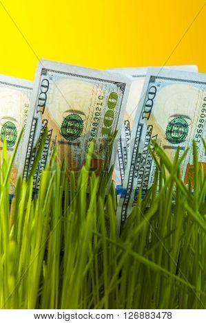 One dollar bills among green grass. Investment growth. Financial concept.