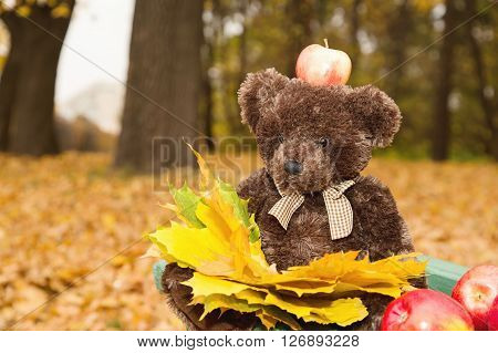 Teddy bear sitting on the bench with an apple on his head. Teddy bear on the bench with yellow leaves and apples. Day of Knowledge.