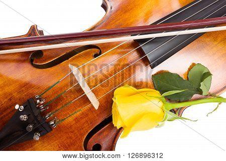 Yellow Rose On Violin