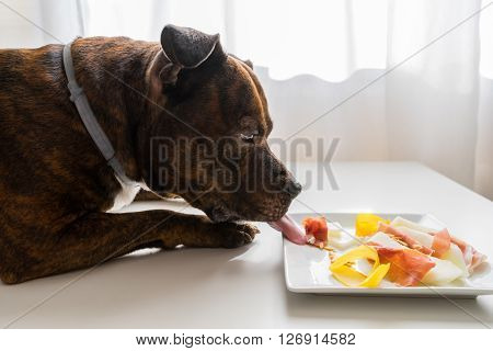 Dog destroying food arrange. Prosciutto slices and yellow water melon on white desk. Dog is licking food.