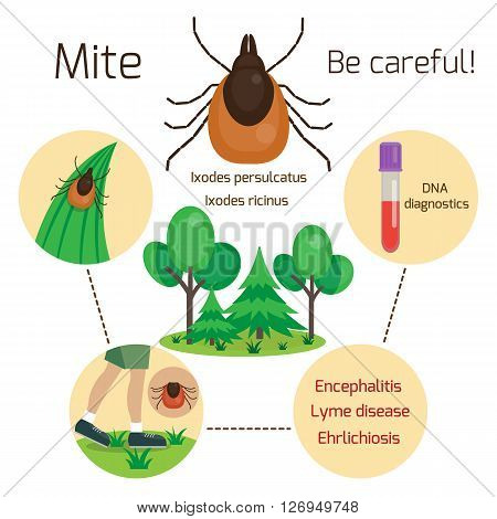 Mite, human skin parasite. Mite disease and infection vectors. Tick skin parasite. Tick infection. Lyme disease, Ehrlichiosis and Evncephalitis. Vector illustration