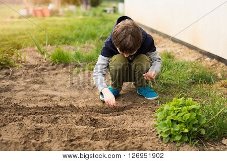 Boy Sowing Vegetables