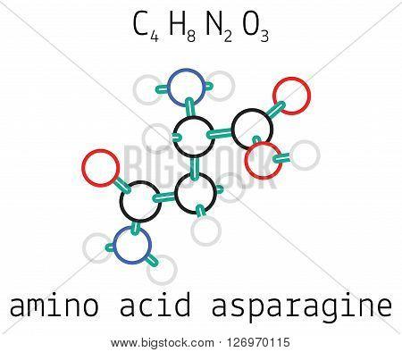 C4H8N2O3 asparagine 3d amino acid molecule isolated on white