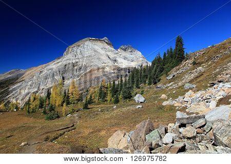 Autumn above treeline in Canadian Rockies, BC
