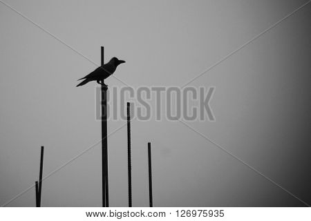 This is a photo of a crow taken by using 55-300 mm lens. This represents the loneliness and that is why it can be titled as