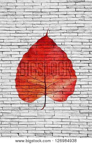 Red Pipal leaf on bricks wall texture