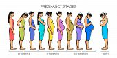 Stages of pregnancy. image of stages of pregnancy. Pregnant woman. Motherhood. Trimester of pregnancy. Nine months of pregnancy. Image of different pregnant women. color illustrations poster