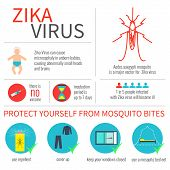 Zika virus infographic elements - prevention, transmission, vaccine, incubation period, microcephaly. Zika virus disease. Infographic zika virus design template. Isolated vector illustration. poster