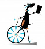 Cartoon dog rides a bike. Smiling dog rides a penny-farthing and looks healthy and happy poster