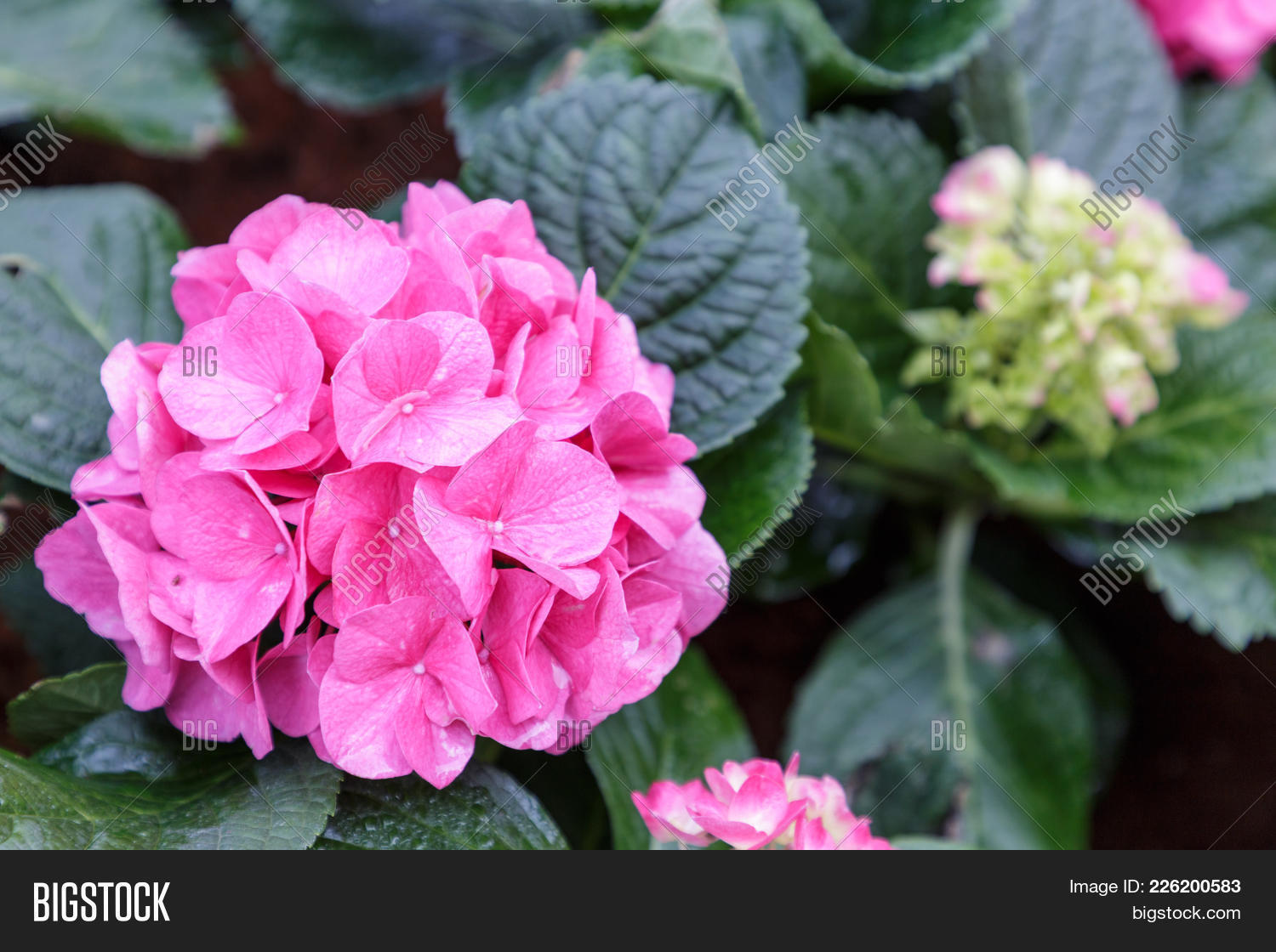 Composition Pink Flower Powerpoint Template Composition Pink