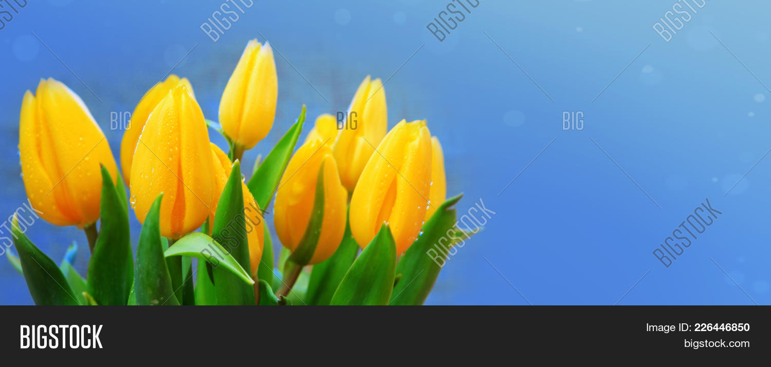 Bouquet Yellow Tulips Blue Powerpoint Template Bouquet Yellow