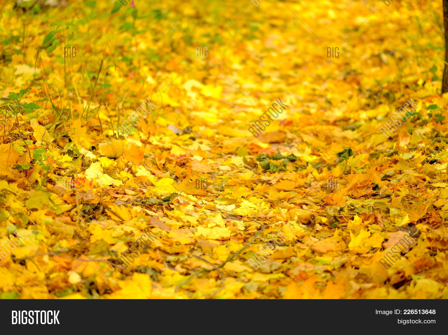 bright colorful autumn powerpoint template bright colorful autumn