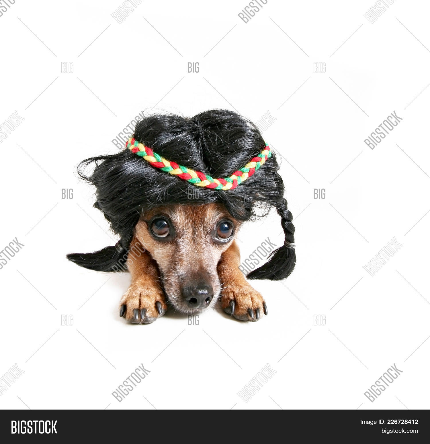 Native american cute chihuahua wearing powerpoint template native p toneelgroepblik Choice Image