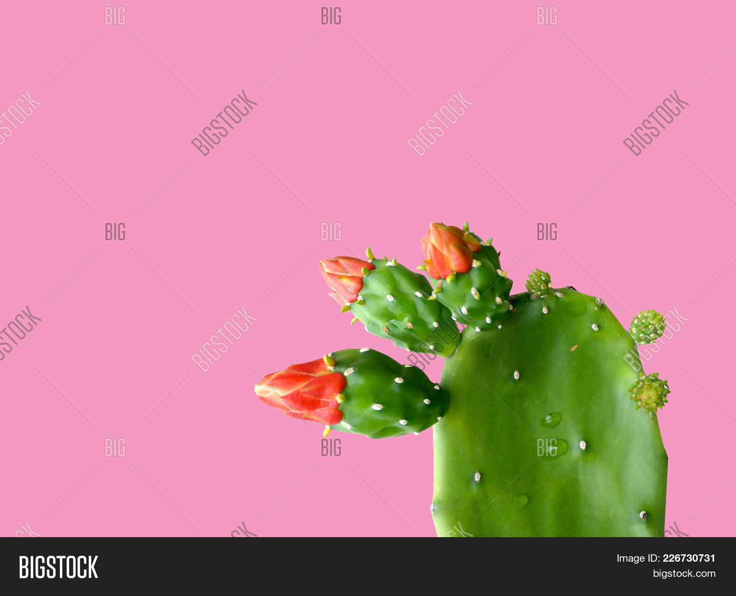 cactus plant on a pink powerpoint template cactus plant on a pink