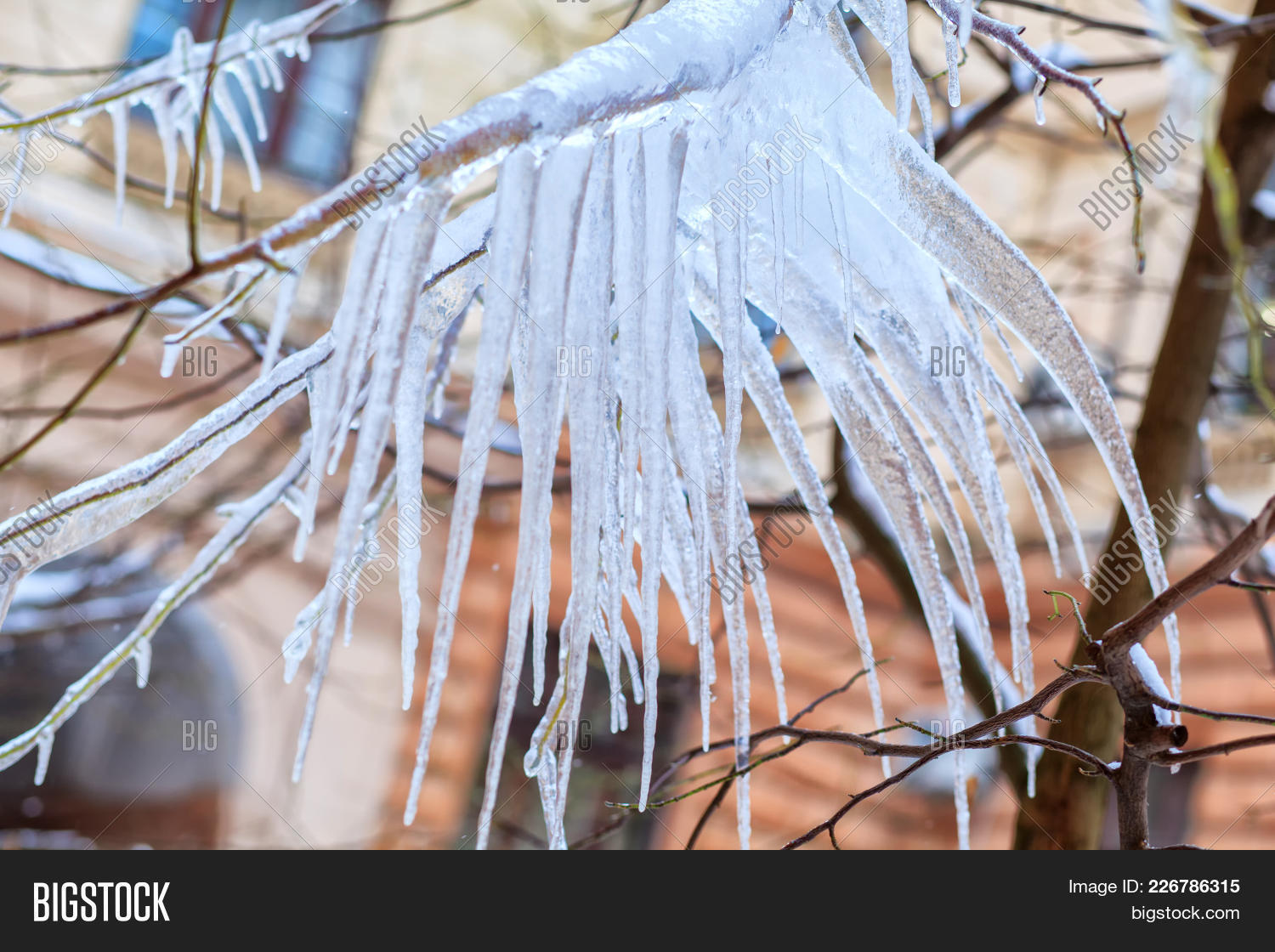 frozenplant tree branch with icicles powerpoint template