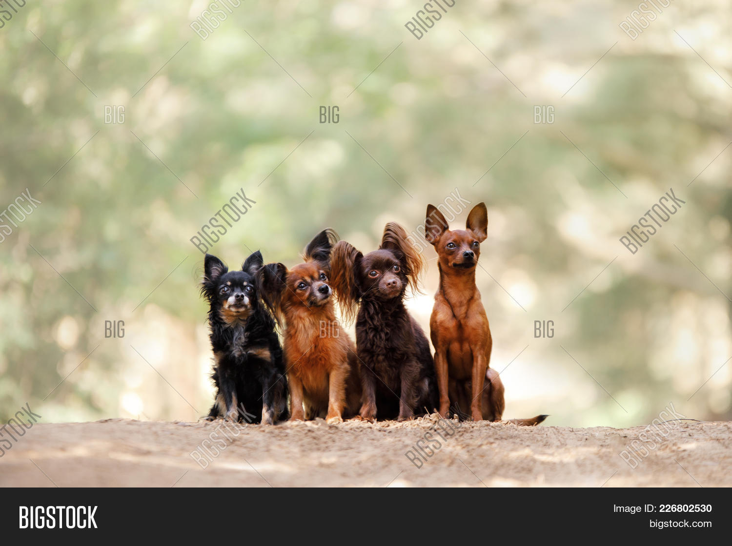 Four dogs powerpoint template four dogs powerpoint background y toneelgroepblik Choice Image