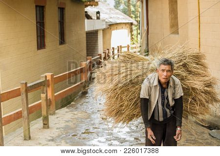 Tired Farmer Carries A Bundle Of Straw From Rice Terraces In Xinjie  Zheng Village...