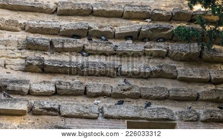 The Wall Of Pigeons At Malaga, Spain, Europe