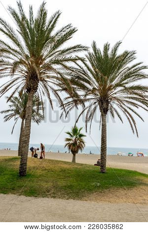 Tall Palm Trees Along The Malaguera Beach With Ocean In The Background In Malaga, Spain, Europe
