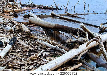 Burnt And Piece Of Various Driftwood Washing Into Shore.