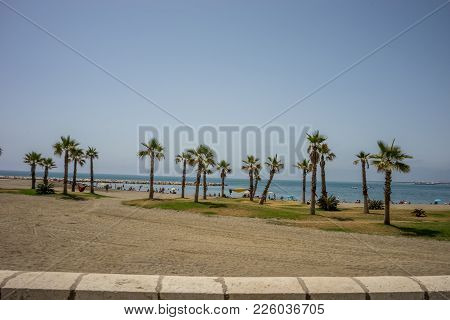 A Collective Bunch Of Palm Trees With An Hammock At Malagueta Beach With The Ocean In The Background