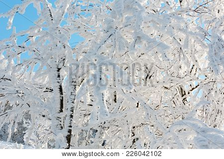 Beautiful Winter Snow Cowered And Rime Frosting Tree On Mountain Slope With Snowdrifts On Blue Sky B