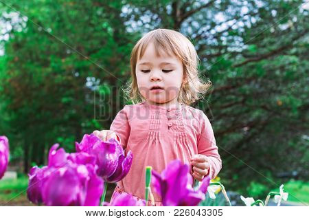 Toddler Girl Playing With Tulips Outside In Spring
