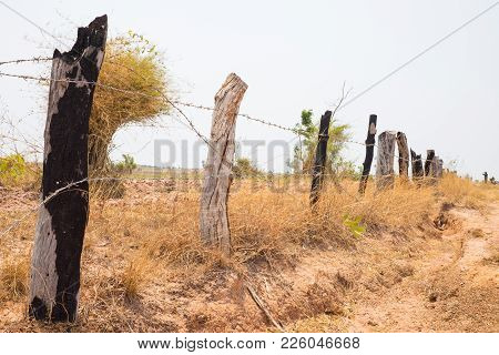 Fence Made Of Wooden Dry Tree And Metal Wire In Tay Nguyen, Central Highlands Of Vietnam