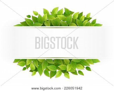 Eco Banner With Fresh Green Leaves. Blank With Place For Text. Realistic Vector.
