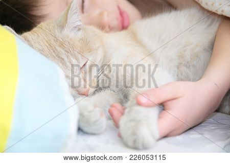 Boy Sleep With Cat, Favorite Pet Lying On Child Chest, Interactions Between Children And Cats