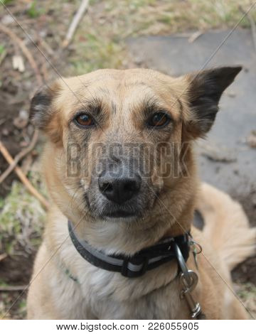 Red Black Spotted Cute Dog Looking At Camera Make Face Wonder Something And Standing On Seaside As A