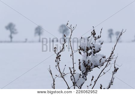 Winter - Snow In The Field And On Plants